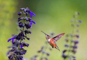 Florida's Audubon Nature Centers