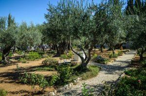 The Garden of Gethsemane, Tuscan, AZ